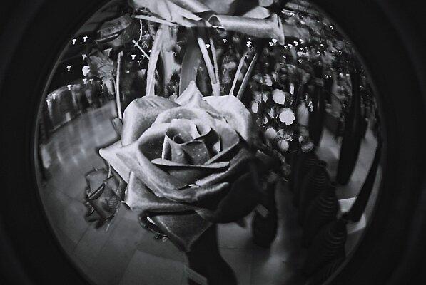a flower for you my dear... by luke bryant