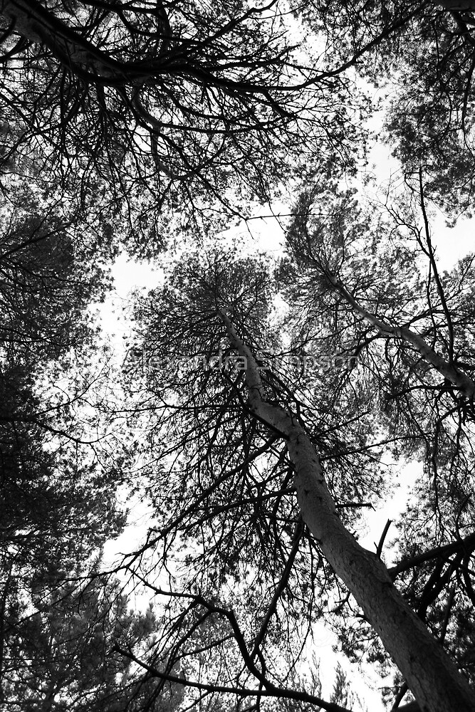Trees by Alex Simpson