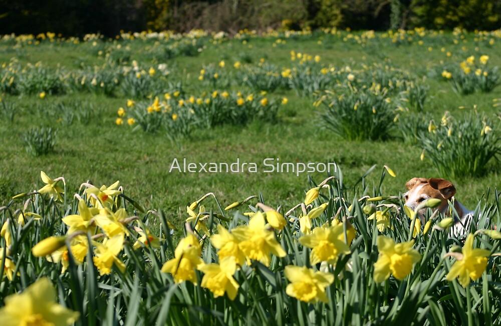 Daffodil Dog by Alex Simpson