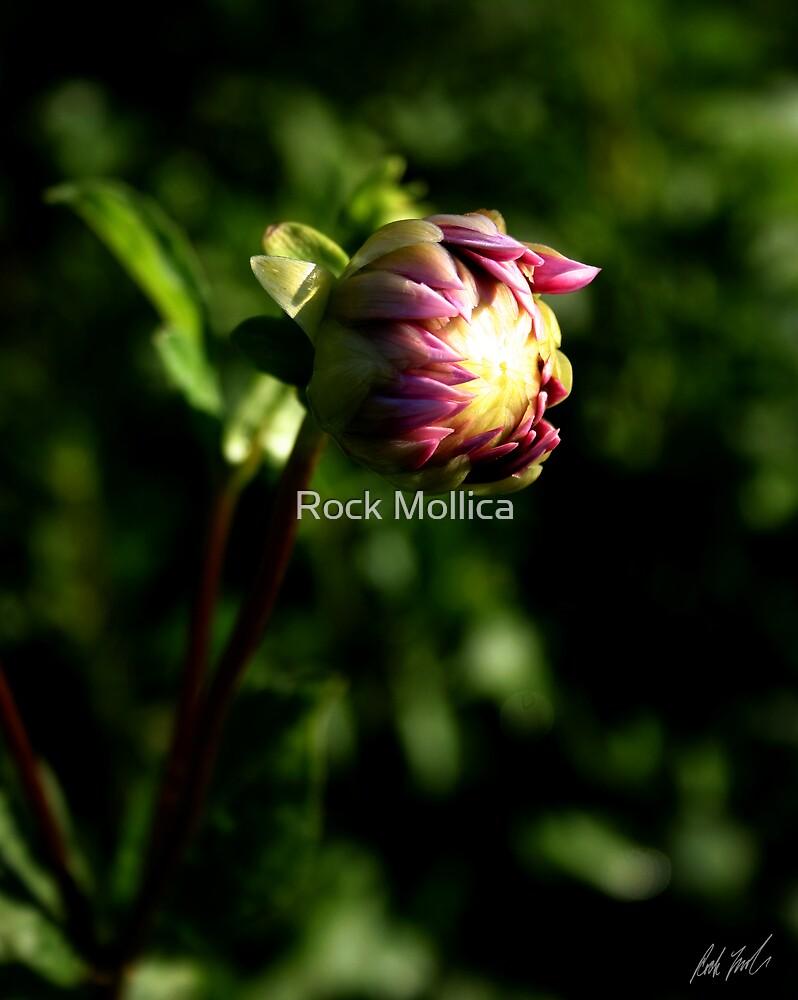 Bud by Rock Mollica