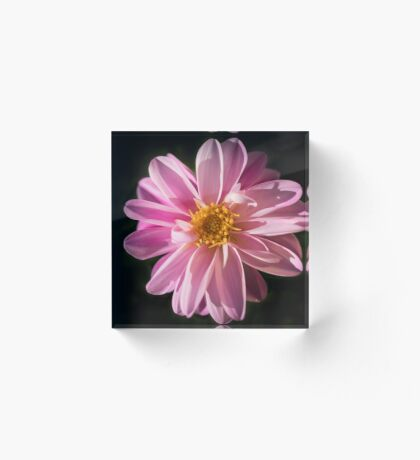 Sunshine on a Perfect Dahlia Acrylic Block
