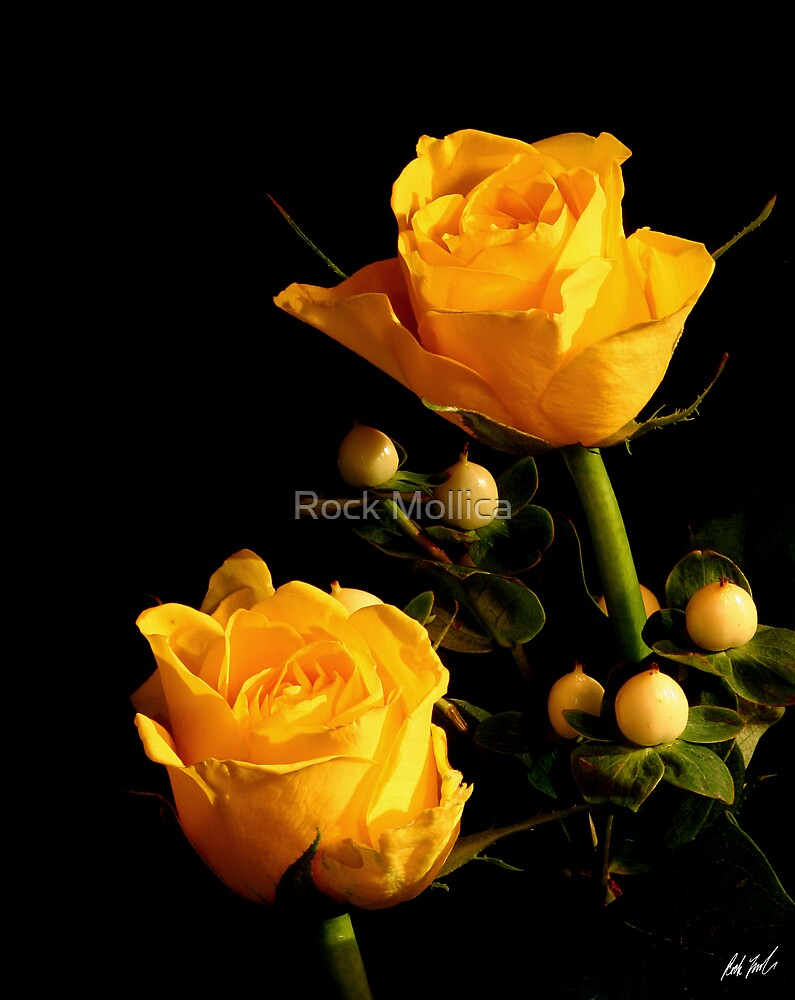 Yellow Roses by Rock Mollica