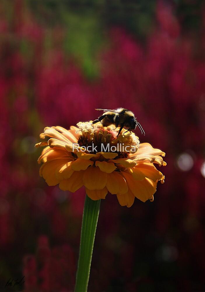 Pollenation by Rock Mollica