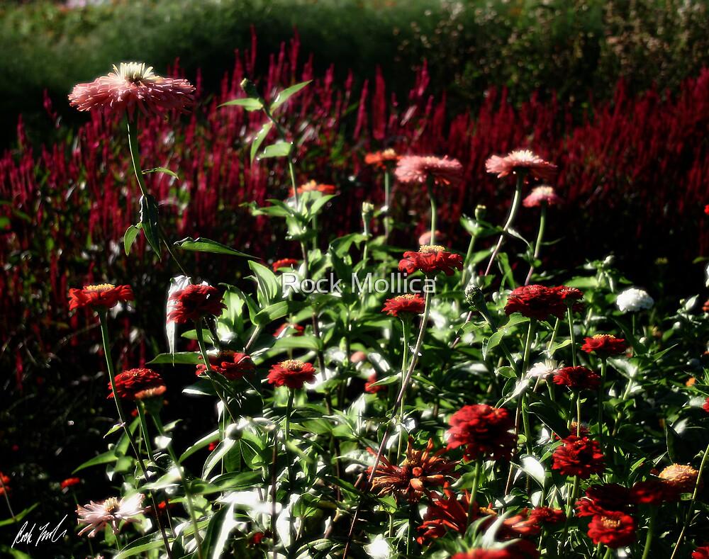 Diffused Garden by Rock Mollica