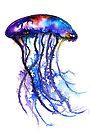 Jellyfish by Linda Callaghan