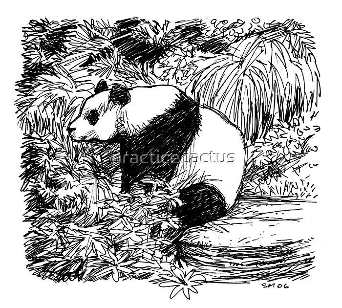Panda sketch by practicecactus