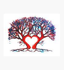 Loveheart Tree Photographic Print
