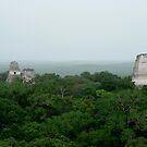 Pyramids above the canopy, Tikal, Guatemala by Peter Fletcher