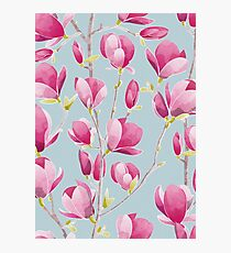 Magnolia Spring Bloom III Photographic Print