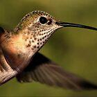 Hummer Profile in Flight by Ken  Aitchison
