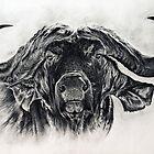 Big Buffalo in charcoal by Anastasia Korikova