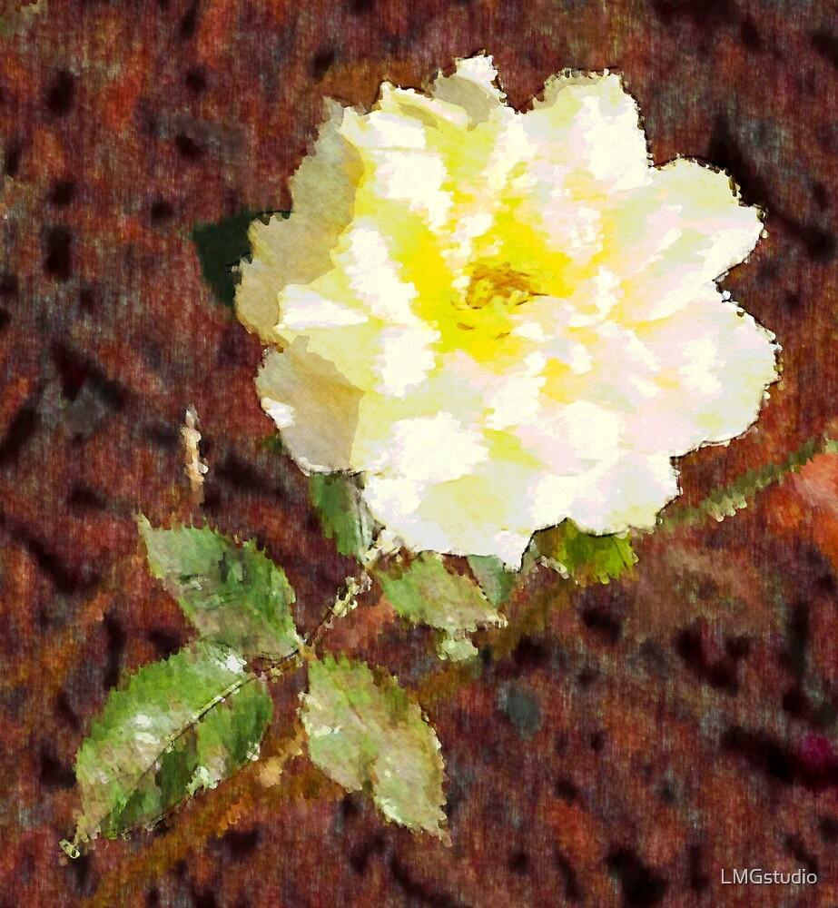 White rose by LMGstudio