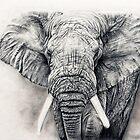 Elephant in charcoal by Anastasia Korikova
