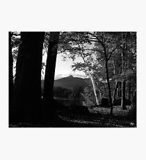 White Birch in a Chocorua Sunset Photographic Print