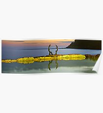 Cabbage Tree Bay Poster