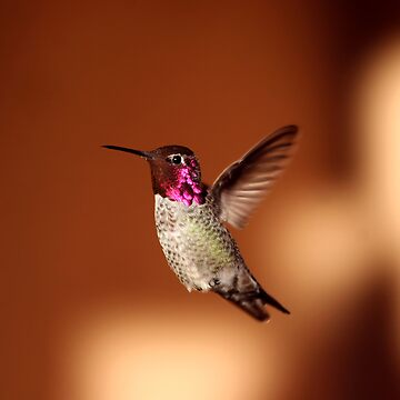 Hummer Flight by djm4