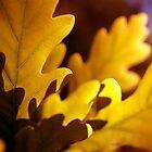 Evening Oak by Rebecca Freeman