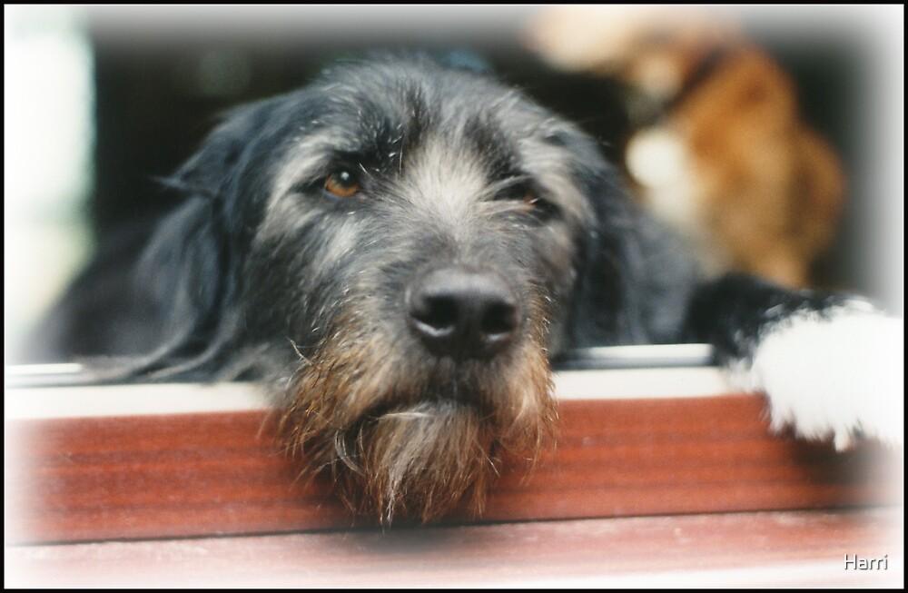 Doggy Daydreams by Harri