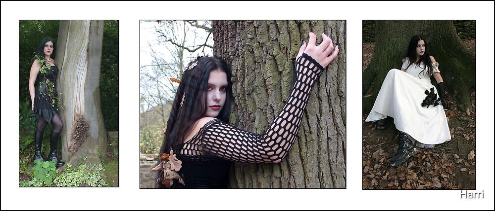 Tree Beauty by Harri
