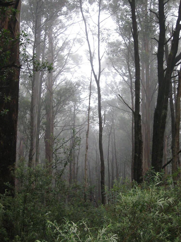 misty gum trees by rani