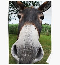 Funny Donkey Poster