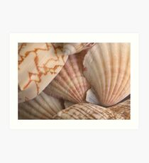 Sea Shells ll Card  Art Print