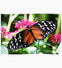Golden Helicon Butterfly Poster