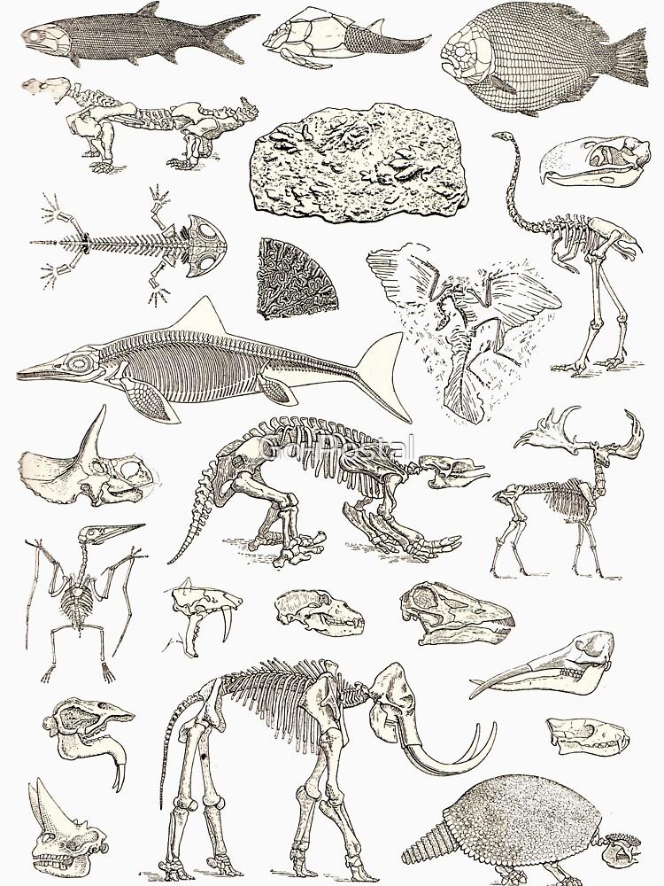 Paleontology Illustration by Go-Postal