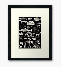 Paleontology Illustration Framed Print