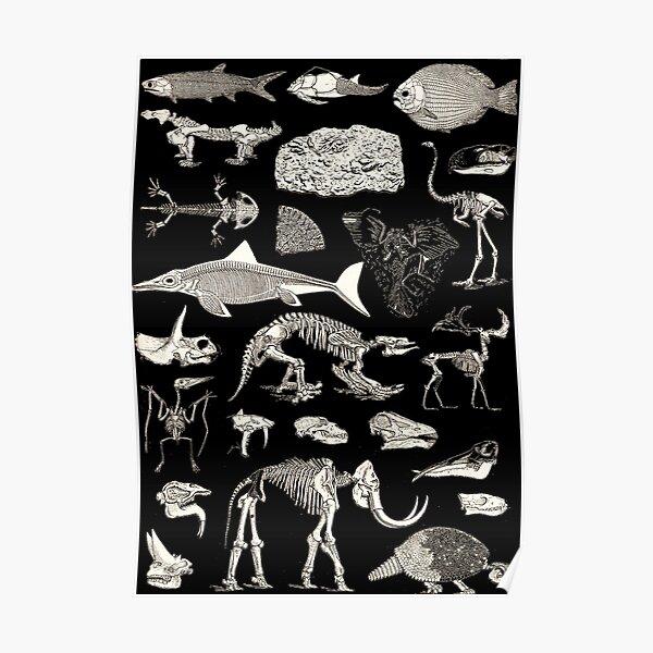 Paleontology Illustration Poster