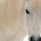 White Pony in Profile by Wayne King