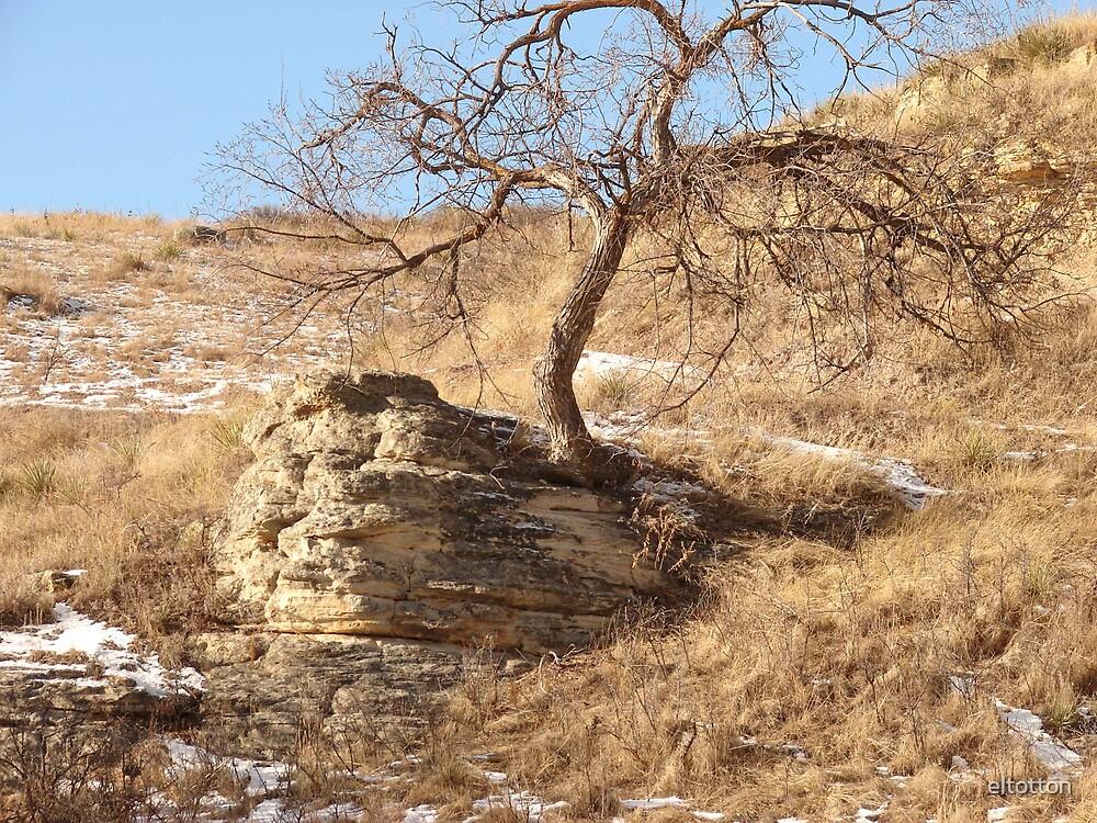 Tree in A Rock by eltotton