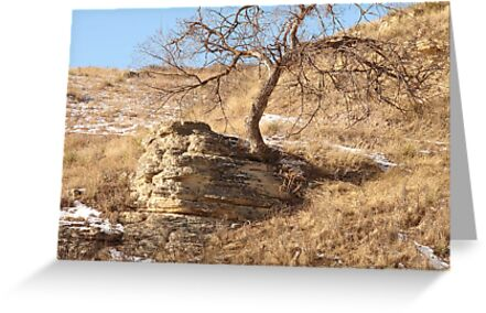 Tree in A Rock by eltotton