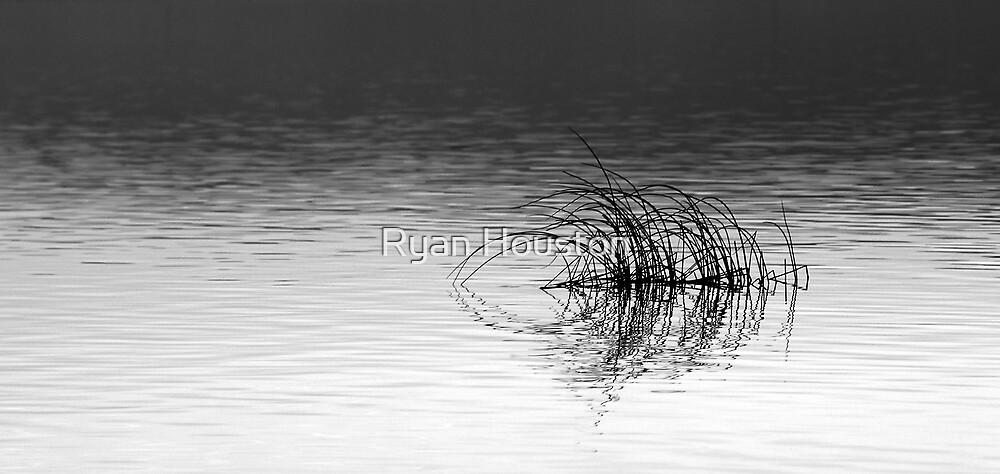 Bent Reeds, Utah Lake by Ryan Houston
