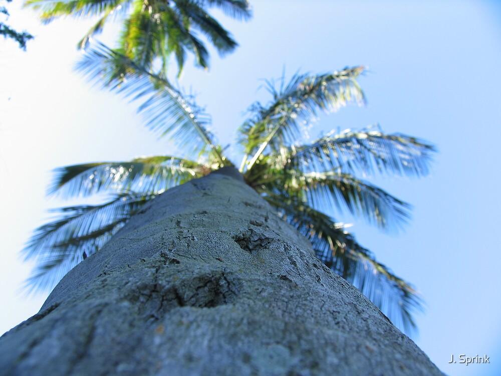 Palm II by J. Sprink