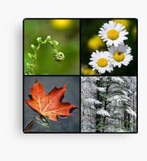 Four Seasons of Nature Canvas Print