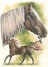 Rocky Mountain Pony by BarbBarcikKeith