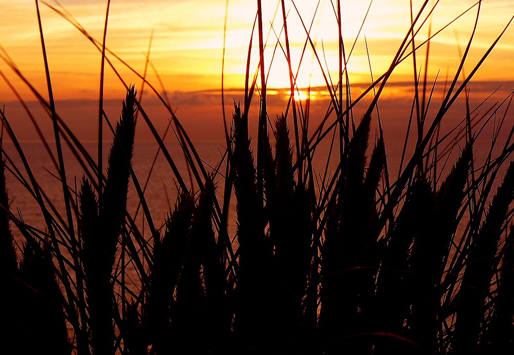 Sunset through the Dune Grass by mariarty