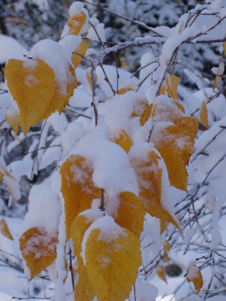 Leaves in The Snow. by eltotton