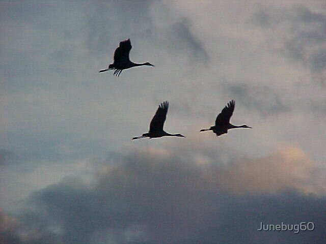 Sandhills in Flight by Junebug60