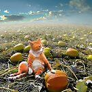 Pumpkin Cat by Igor Zenin