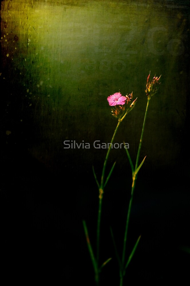 Seeking light by Silvia Ganora