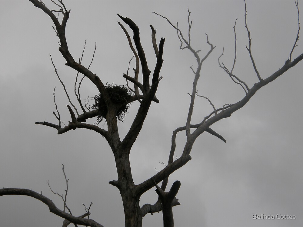 eagles nest by Belinda Cottee