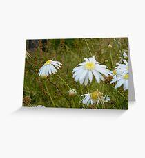 Daisies at Blackwarry 3 Greeting Card