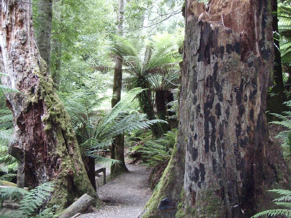mottled bark and lichen on tree trunks by gaylene