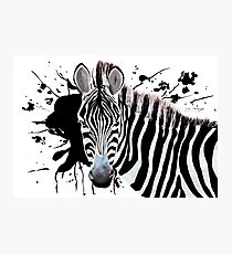 Zebra Photographic Print