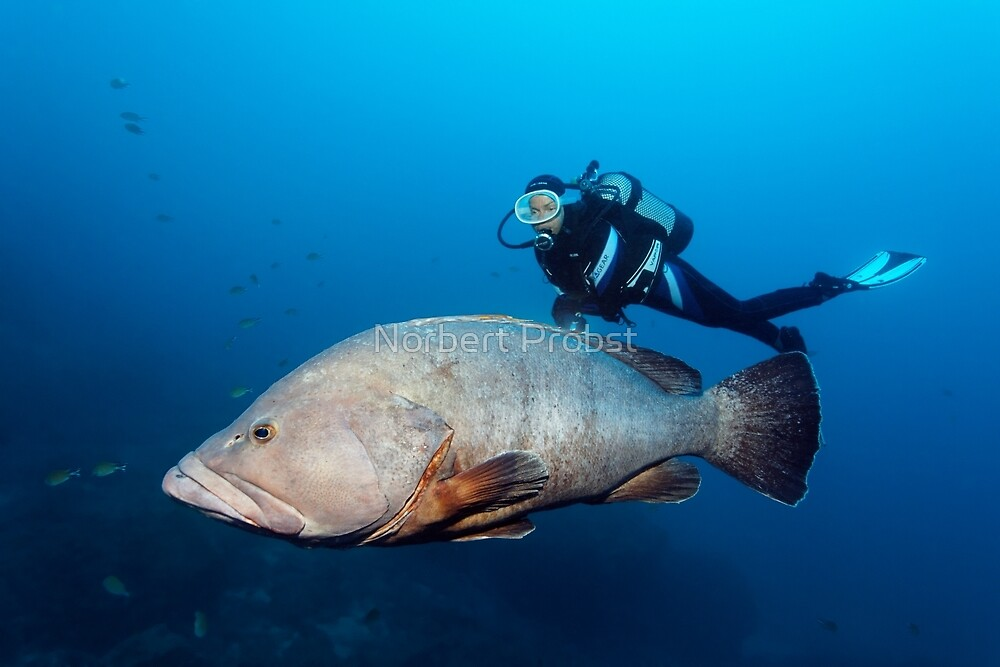 Dive Guide by Norbert Probst
