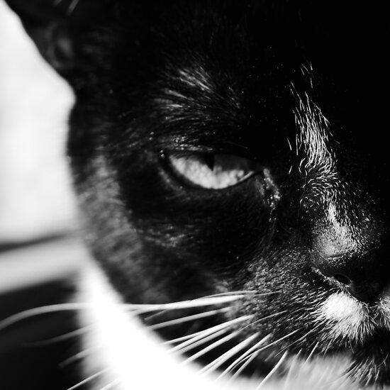 cat Jagoda black and white by JBJart