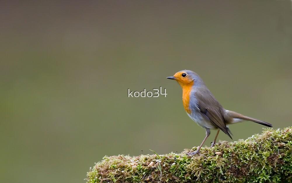 Robin by kodo34