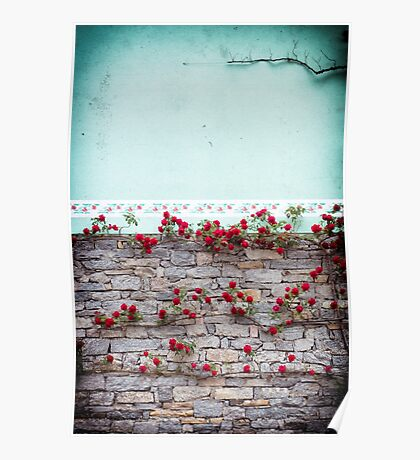 Roses on a wall Poster